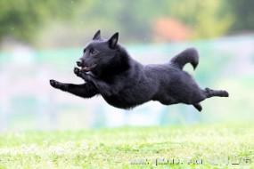 摄影师用高速相机拍飞行狗