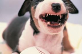 动物们笑起来也会很开心