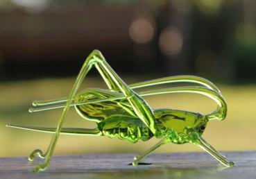 透明昆虫 看了让人爱不释手