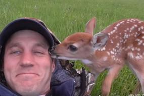 小鹿被救后不愿意离开主人