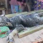 传说中的神兽麒麟?泰国母牛生下有鳞奇兽