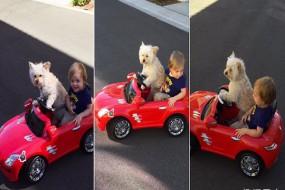 聪明狗狗居然能开车载小主人兜风