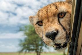 奇趣野生动物摄影 抓拍动物们怪趣瞬间