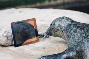 海豹夫妻用iPad沟通感情