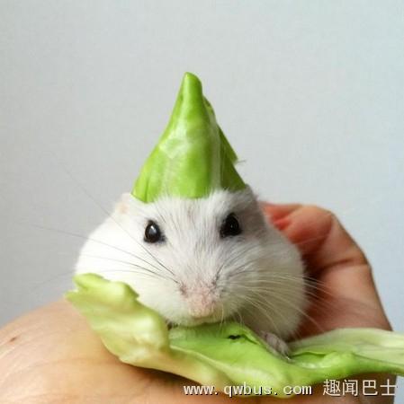 可爱小仓鼠也能玩角色扮演