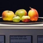 英国古董苹果树一年只结3个果