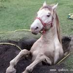 马失后蹄的惨痛代价