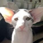 大耳猫象哈利波特中的精灵多比
