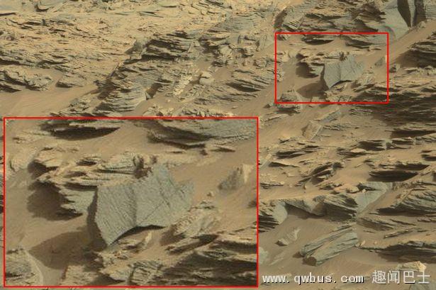 UFO每日观察(UFO Daily Sightings)华林(Scott C Waring):发现火星蝎子-趣闻巴士