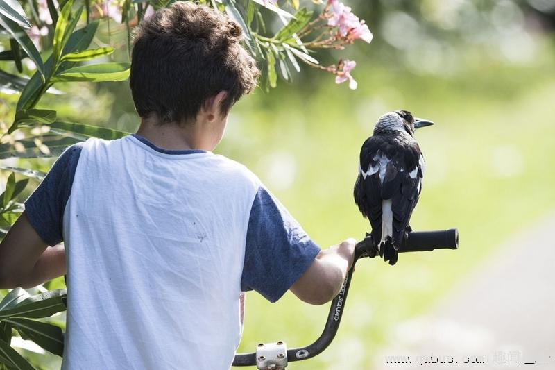 摄影师拍儿子与喜鹊的人鸟情缘-趣闻巴士