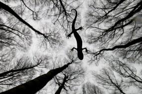 英世界野生动物摄影大赛:奇特角度看动物