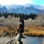 美神奇萌宠猫  跟着主人冒险之旅两年