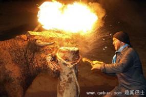 西班牙火牛节惊险刺激 公牛角绑火球狂奔