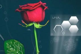 科学家培育半机器植物 活体玫瑰中制造出电路