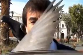 冏!市长谈严控鸽子无奈被鸽子抢镜