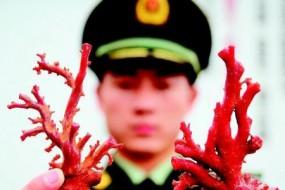 男子走私红珊瑚价值380万 贵过黄金