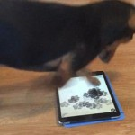 为宠物制作的电子游戏:狗狗玩的好嗨