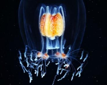 深海中的奇特生物 美得已经不真实了