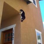 好奇害死猫:喵星人被困囧照套图