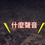 台湾一公园半夜传出神秘高频声响