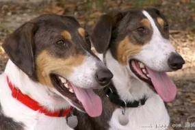 克隆2只小狗 他为爱犬延续了生命