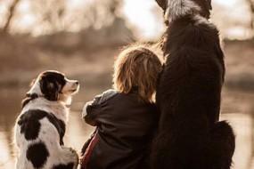 研究显示狗狗能减轻儿童情绪焦虑症