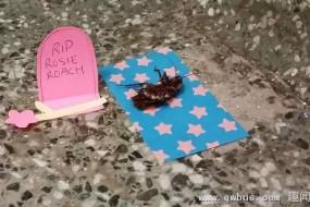 这只蟑螂的传奇竟是从它死后开始的