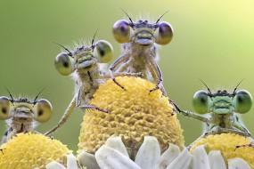 大眼睛蜻蜓乖乖让他拍 原来是因为这