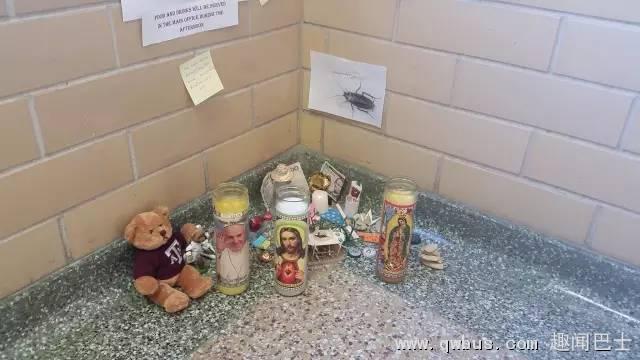 一只蟑螂死在美国的大学教学楼后....