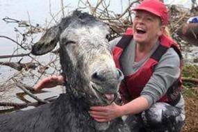 落水驴被救起后开心大笑