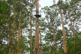 无限风光在险峰:20层楼高巨树观景台你敢爬吗?