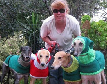 好暖心 流浪狗都穿上了圣诞特别款毛衣