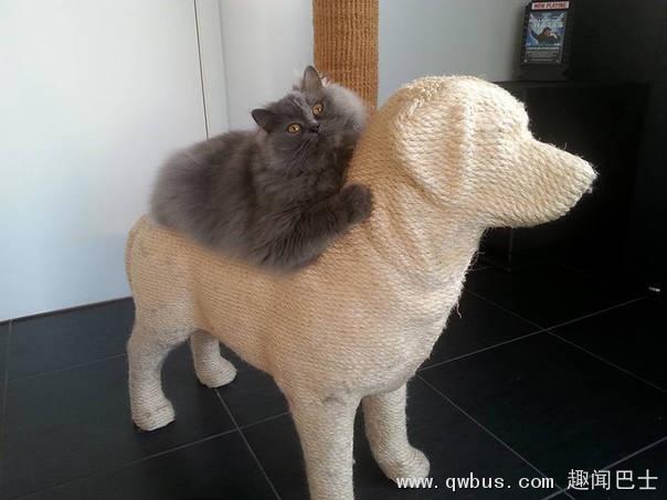 猫狗大战 喵星人领先一分