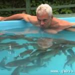太拼了!电视主持人亲自跳进食人鱼池