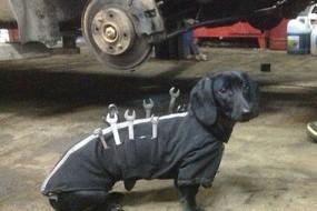 狗狗变身移动工具箱