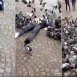 鸽子围攻躺地男子抢食面包屑