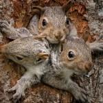 松鼠兄弟急着出门探险 不料被卡住了