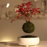 44b9_floating-bonsai-trees-air-hoshinchu-25.jpg