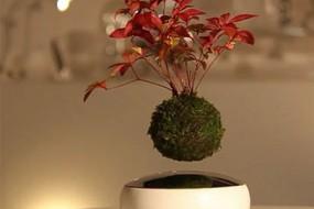 磁悬浮盆栽 日本人重现天空之城