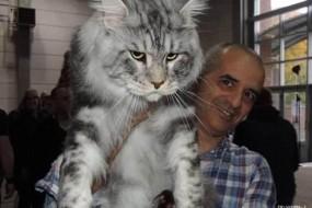 家里有这么大只猫都会被吃穷吧