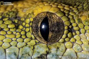 神奇的动物眼睛特写 为生存而进化
