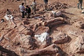 阿根廷发现37米高泰坦巨龙化石