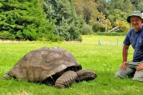 近2百岁长寿巨型陆龟恢复生机