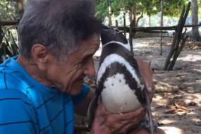 企鹅5年来守护救命恩人 总能找到回家的路
