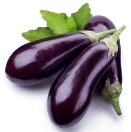 神奇植物茎上长茄子根上长土豆