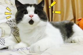 猫咪经济学在日本一枝独秀