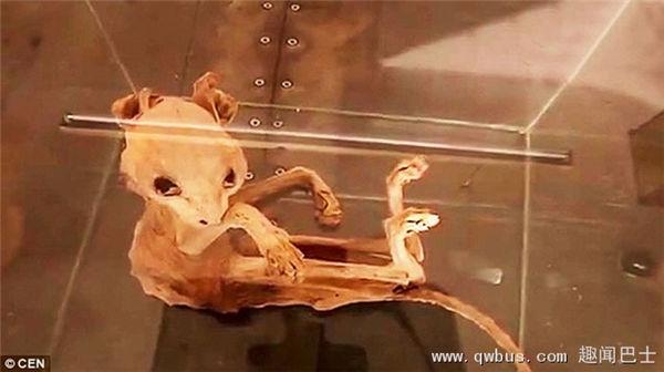 土耳其古老地窖发现神秘动物木乃伊