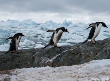 摄影师海上漂流3周到南极拍震撼美景