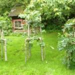 园艺师将树木生成天然的家具