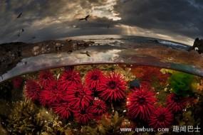 分割摄影:水面上下美景都拍到